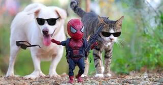 kocak-10-foto-jika-spider-man-bersahabat-dengan-kucing
