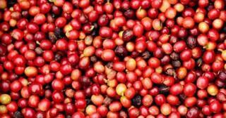 kopi-wine-sensasi-citarasa-dalam-secangkir-kopi